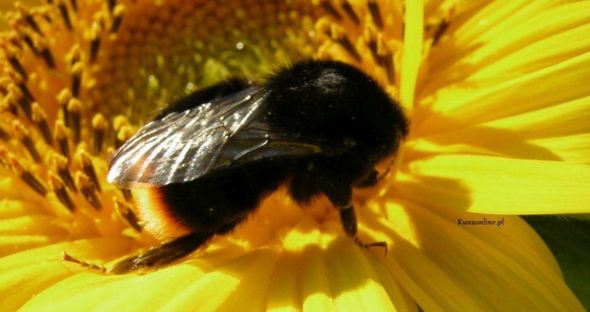Pracowite Panie Pszczoły