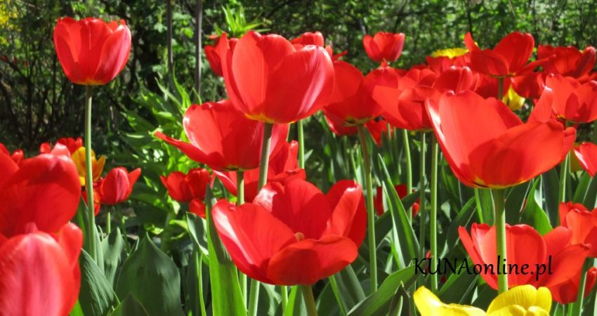 Naturalne ujęcia - kwiaty