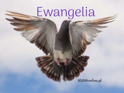 EWANGELIA 2 LIPCA 2020 + komentarz